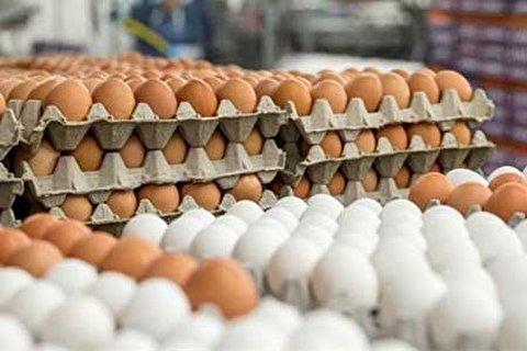 واردات 10 هزار تن تخم مرغ برای ثبات بازار